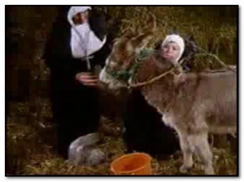 Bodil Joensen - Nuns in barn with Donkey