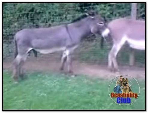 0174 - Donkey Power