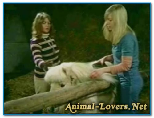 Bodil Joensen – Animal Sex Pornstars – Bodil And Pony