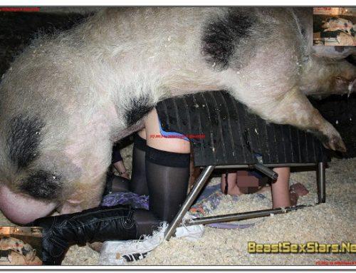 006 – Beast Photos – Animal Sex Pics – Beastiality Images