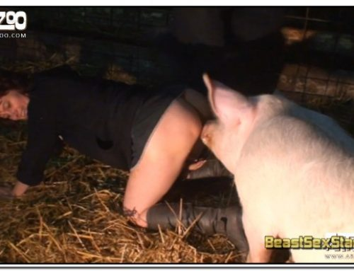 04 – Wild Boar Fucks A Girl – Sex With Pigs