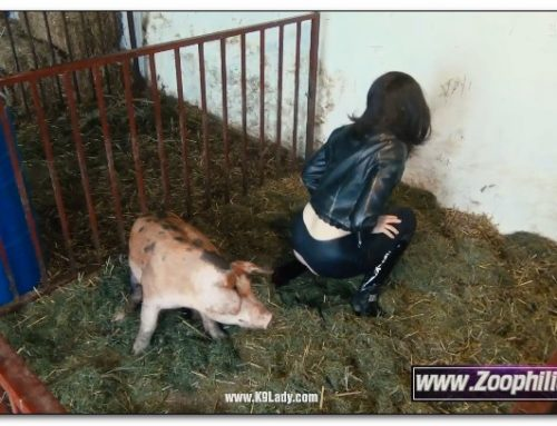 29 – Wild Boar Fucks A Girl – Sex With Pigs