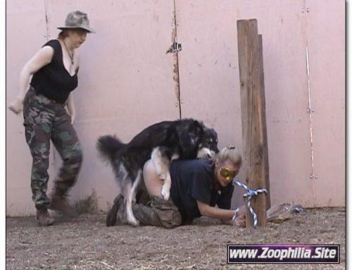 Fun In The Dog