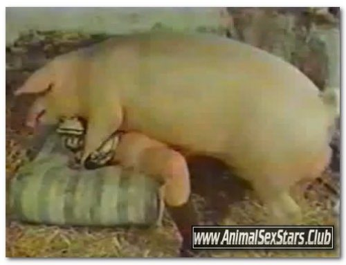 40 – Wild Boar Fucks A Girl – Sex With Pigs