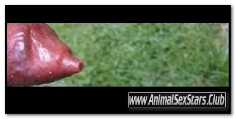 0128 – EXTREME SCENES OF SEX WITH VARIOUS ANIMALS